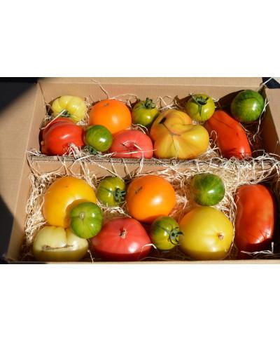 Colis de 3 Kg de Tomates Bio multicolores